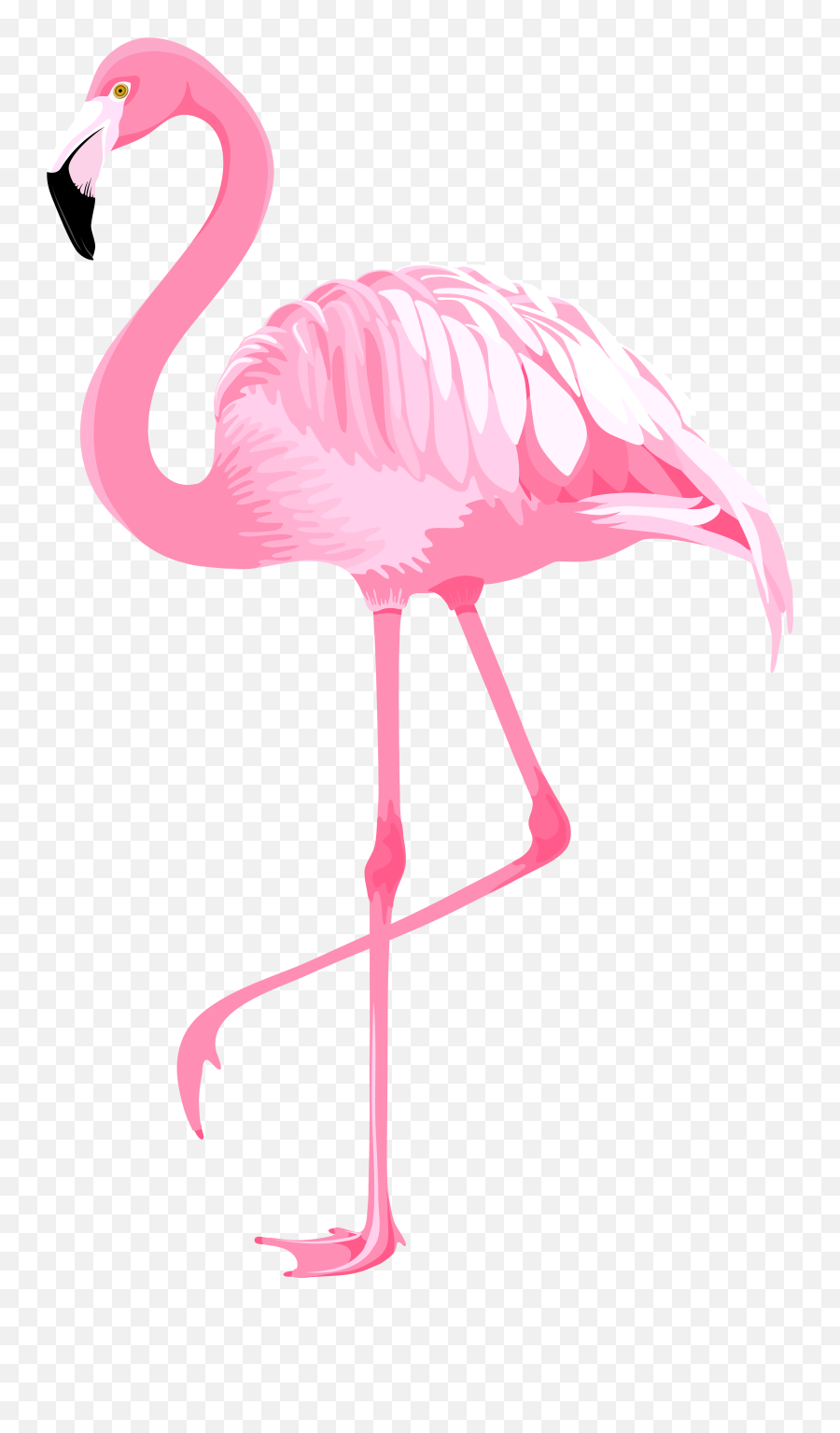 Cool Flamingo Cliparts For Free Png