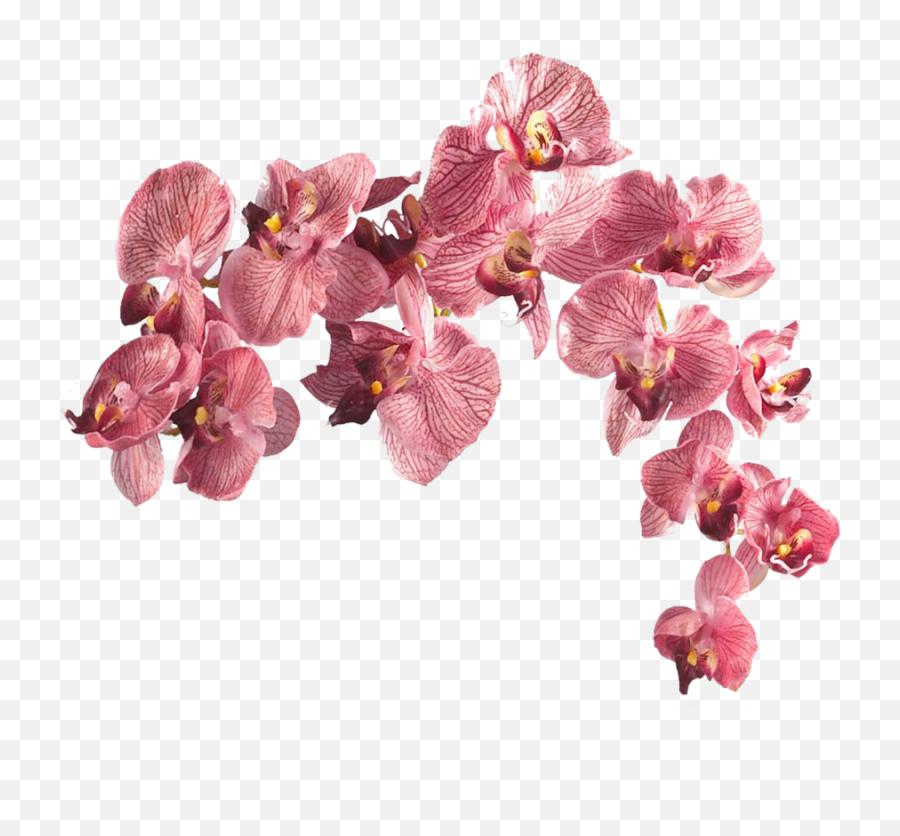 Flower Aesthetic Transparent Png - Transparent Flowers Png Aesthetic,Aesthetic Pngs