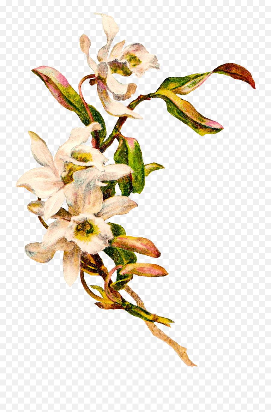 Victorian Vintage Flowers Transparent - Transparent Background Flower Png Vintage,Vintage Flower Png
