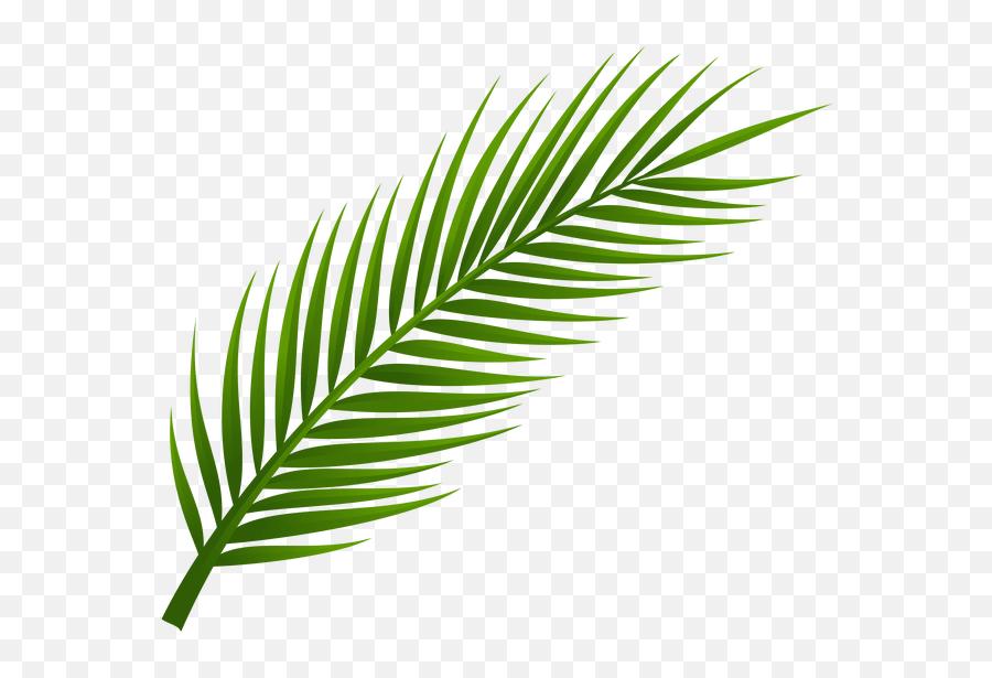 Pin De Ludovic Lunatic Em Leaves - Transparent Transparent Background Leaf Png,Leaves Png